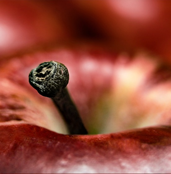 Apple-red-stem