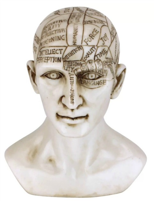 Phrenology the Science of the Brain Victorian Replica Bust