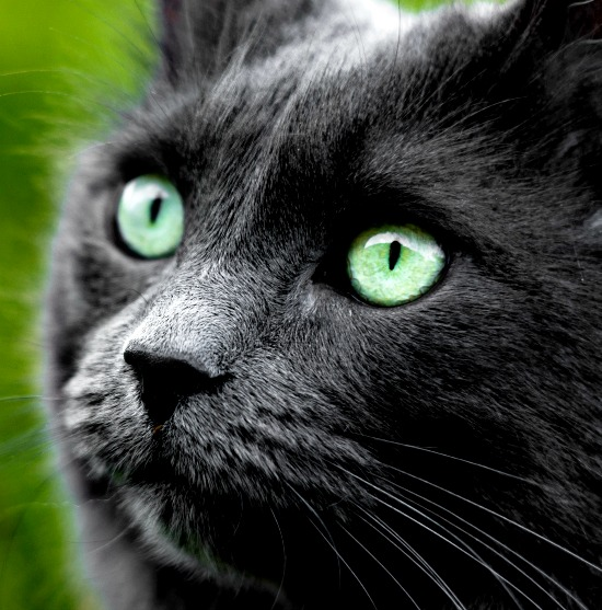 cat-green-eyes