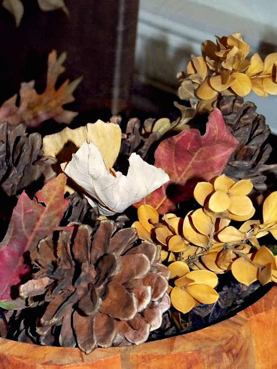fall-leaves-cones-1