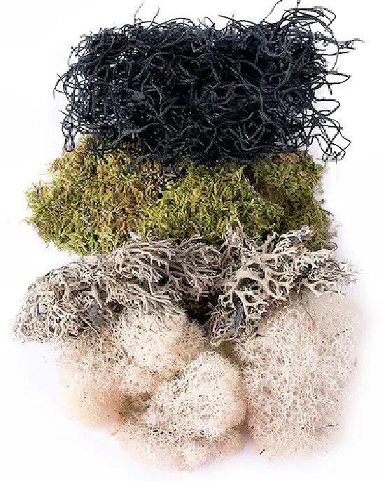 Natural Moss Mix