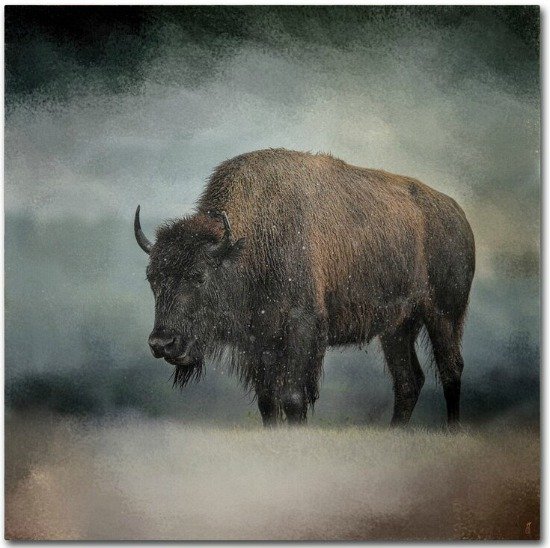 Stormy+Day+Buffalo+by+Jai+Johnson
