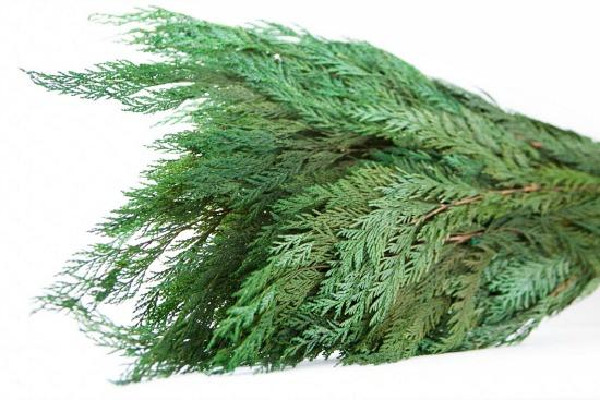 Preserved Cedar Foliage