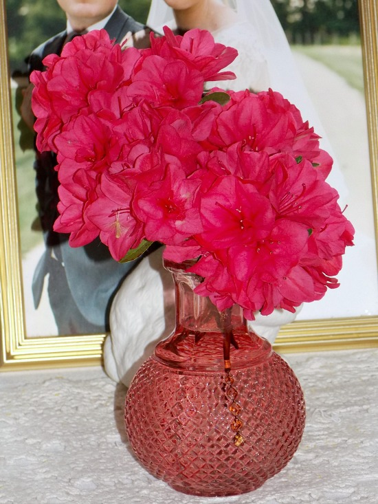 azaleas-pink