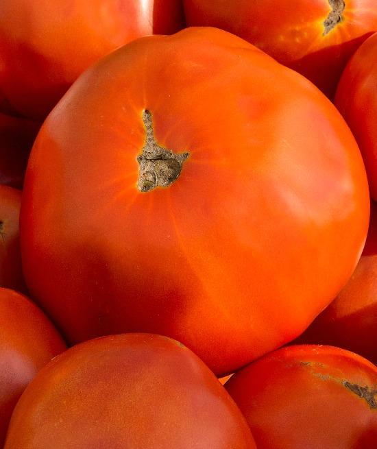 fresh-tomatoes-summer