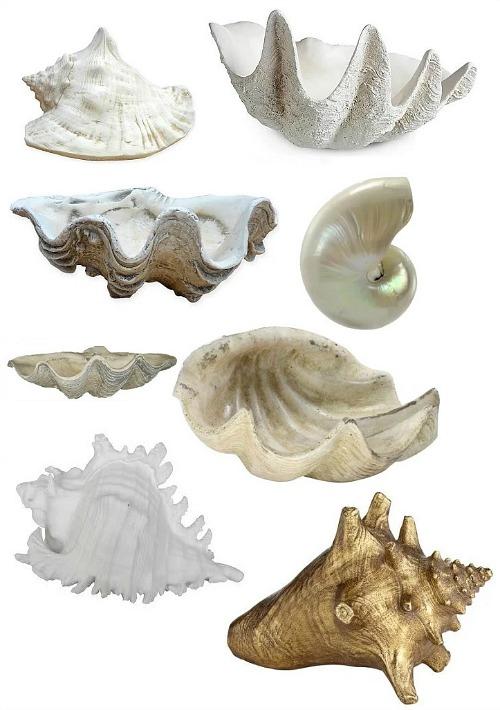 white-sea-shells