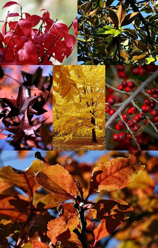 fall-leaves-arrangements
