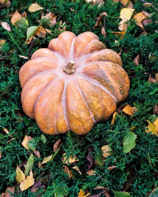 fairy tale pumpkin