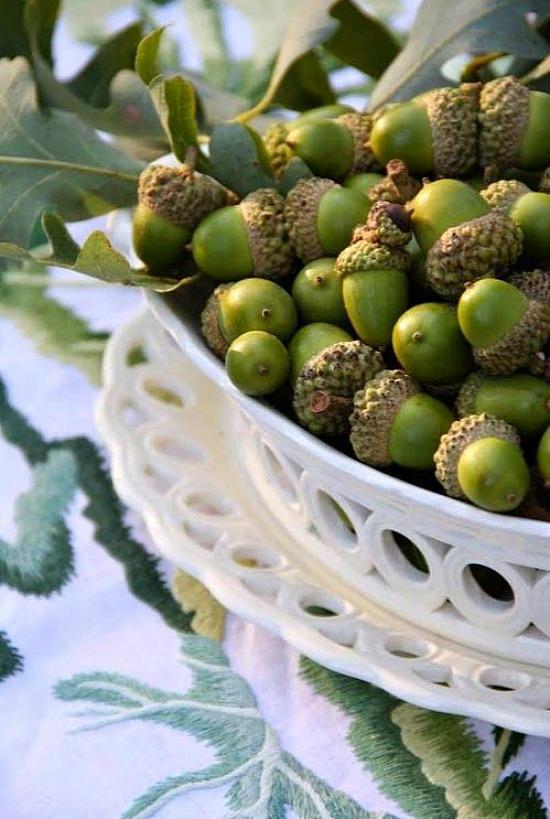 acorns-Charlotte-Moss