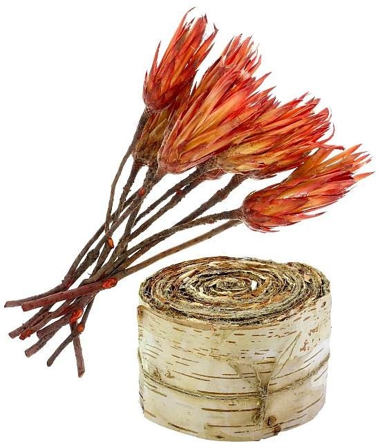 dried-protea-flowers