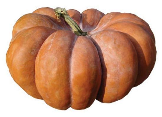 fairytale-pumpkin-7