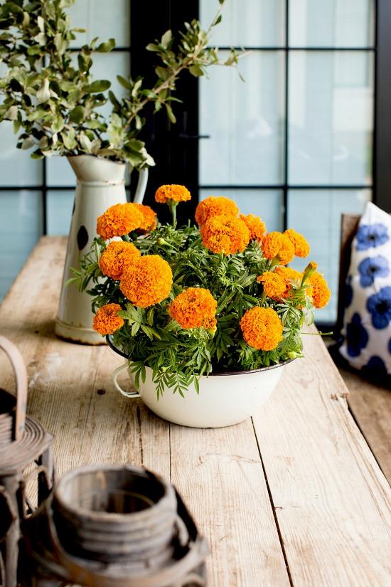 marigolds-on-wood-table