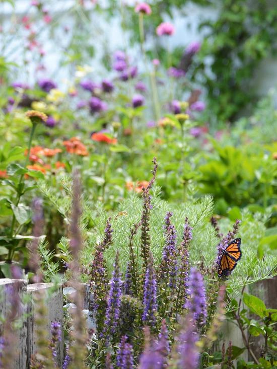 butterfly-in-flower-garden