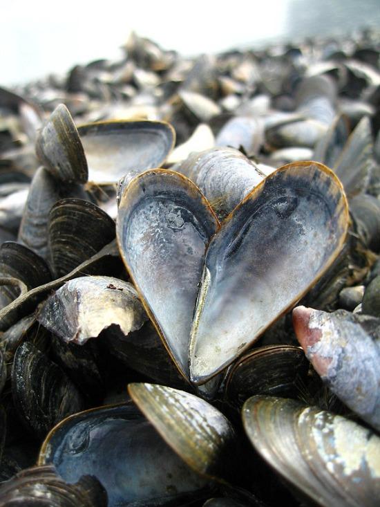 mussel love