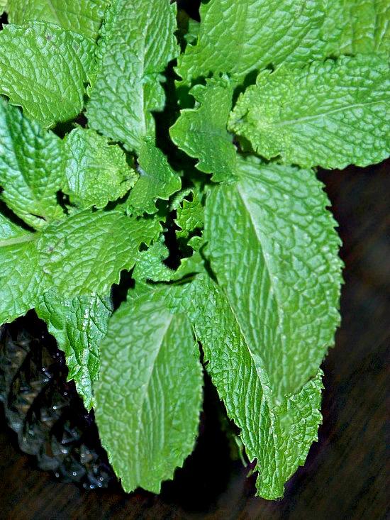fresh mint in vase1
