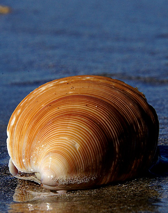 by the sea shell