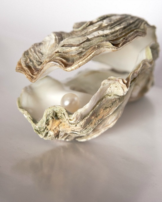 oyster-with-pearl