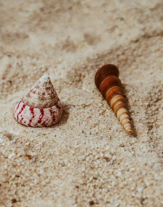 shells-on-sand