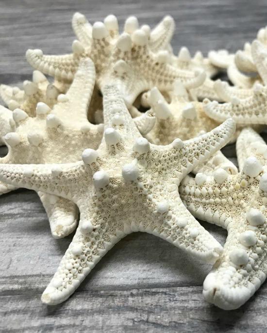 white knobby starfish
