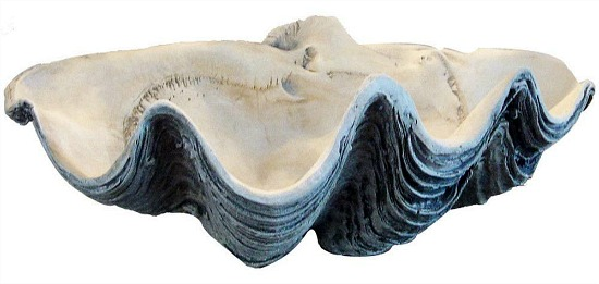 White and Gray Clam shell
