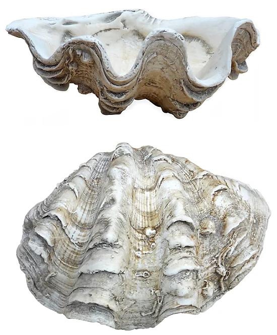 Mini Clam Shell