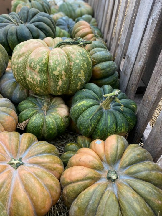 green-orange-pumpkins