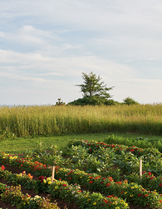 Stanton-Residence-garden