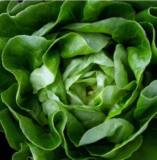 Tom Thumb leaf lettuce seeds