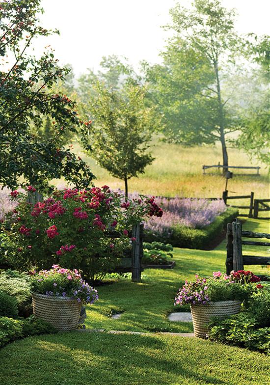 country-garden-geraniums-pansies-osteopermum-silver-petiolaris
