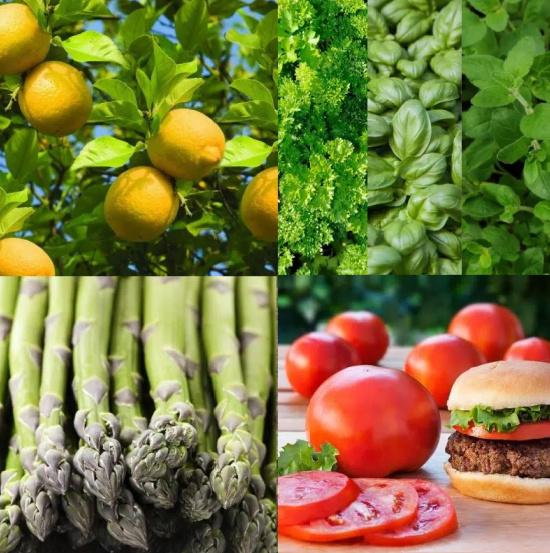 garden-vegetables-citrus