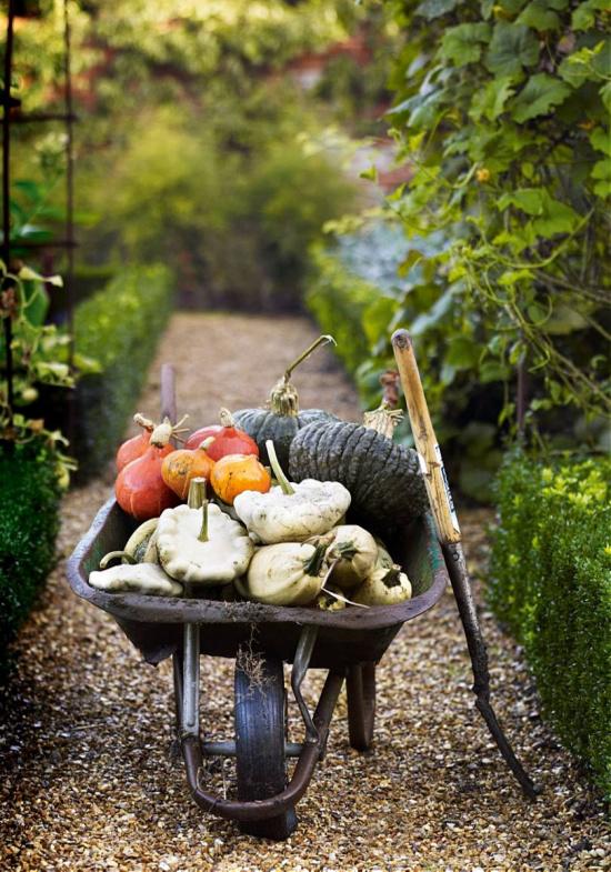 garden-vegetables-in-wheel-barrow-House-and-Garden