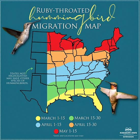 hummingbird-map (1)