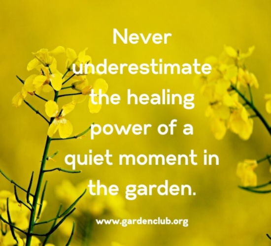 never-underestimate-the-healing-power-of-a-quiet-moment-in-the-garden