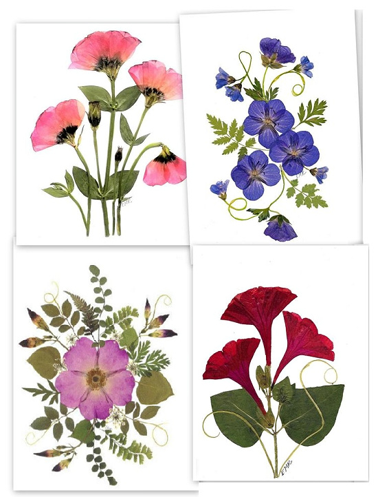 Pressed flower notecards, set of 6 assorted cards, blank notecards