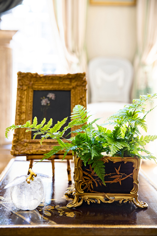 Charlotte-Moss-fern-leaves-in-container