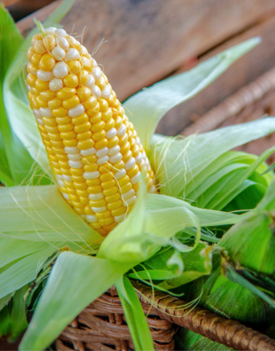 corn-fresh-cob