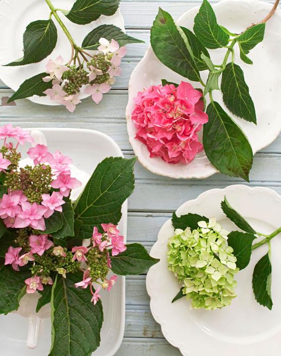 pink-hydrangeas-in-white-plates