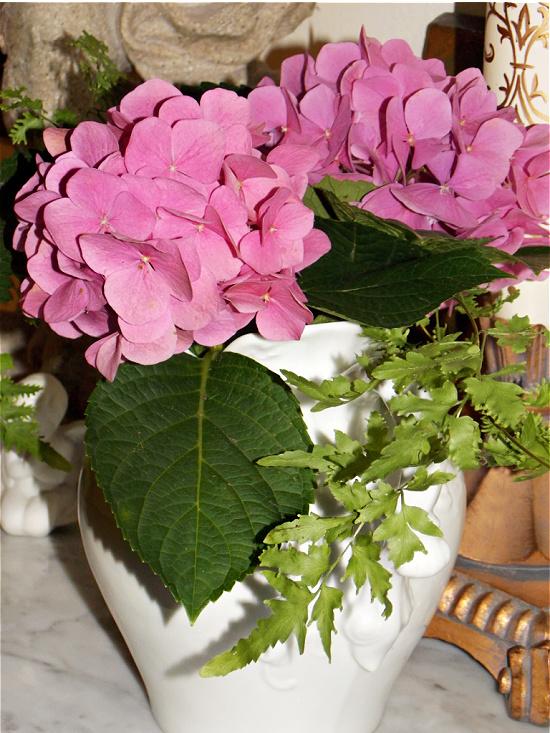 summer-pink-hydrangeas